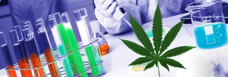 marijuana-studies-drugs