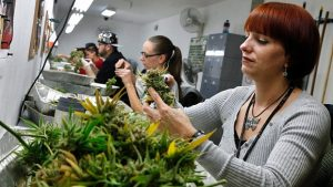 rethinking-pot-colorado-gets-ready
